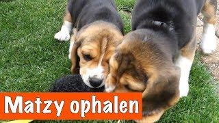 Download Eindelijk Matzy ophalen 🐶 | DierenpraatTV Video