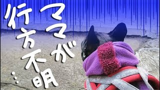 Download 散歩の途中で飼い主がスーパーに入ると愛犬は… Video