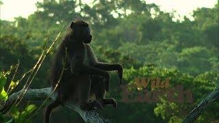 Download WildEarth - Sunset Safari - January 26, 2020 Video