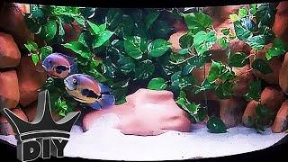 Download My TOP 5 aquarium fish!!! Video