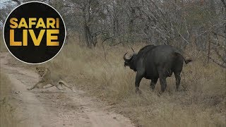 Download safariLIVE - Sunset Safari - July 19, 2018 Video