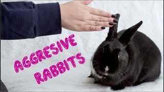 Download How to Bond With an Aggressive Rabbit Video