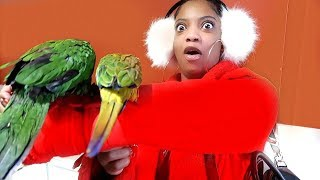 Download SHE'S DEFINITELY NOT FEELING THE NEW PET BIRDS!!! | VLOGMAS DAY 7 Video