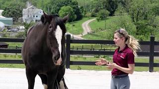 Download What Keeps You Safe Around Horses Video