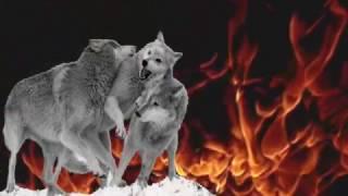 Download TÜRKLÜK DUASI - OGUZ KAGAN Video