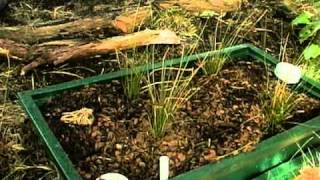 Download Composting Toilet Video