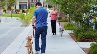 Download How to Train Your Dog to NOT PULL on the Leash. Utilize The 4 Powerful Leash Training Tips In Video Video