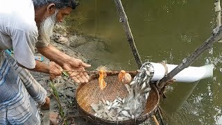 Download Believe This Fishing? Unique Fish Trapping System | New Technique Of Catching Country Fish Video