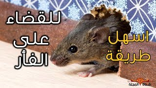 Download بهذه الطريقة امنع الفأر نهائي من دخول بيتك - اسرع طريقة لقضاء على الفئران - الطعام المفضل للفئران Video