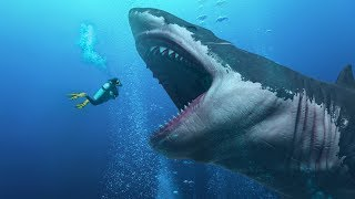 Download Did They Find a Living Megalodon In the Mariana Trench? Video