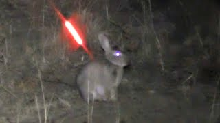 Download Bowhunting Rabbits NIGHT TIME Video