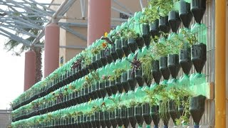 Download The Green Wall - Educational Vertical Garden Bottle System Project Video