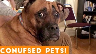 Download Funniest Confused Pets Compilation 2018 | Funny Pet Videos Video