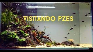 Download VISITANDO PZES + DESCUENTOS PARA TODOS! Video