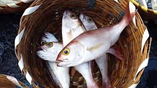 Download Early Morning Fish Market || Kasimedu || Largest fish market in chennai || Footra Video