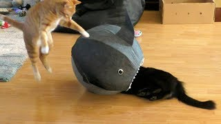 Download Funny Cat Clips! - Cole & Marmalade Video