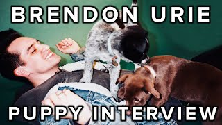 Download The Puppy Interview With Brendon Urie Of Panic! At The Disco Video