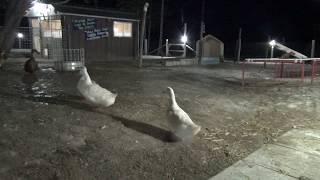 Download Ducks Outside... Night Live Stream Feb 22-23, 2018 Video