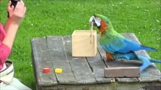 Download Einstein Bird: Smart Parrot Solves Riddle Video