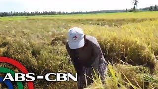 Download Ayuda sa mga Magsasaka   Failon Ngayon Video