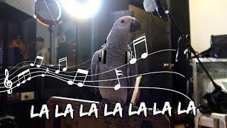 Download My Bird Hits the Recording Studio (Pak-o-Bird Review) | Vlog #274 Video