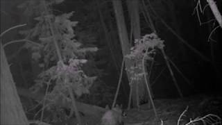 Download Rough Canyon Bigfoot Expedition Gamecam Results Video