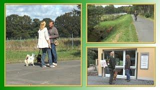 Download Ausführbedingungen für Tierheim-Hunde | TierheimTV informiert Video