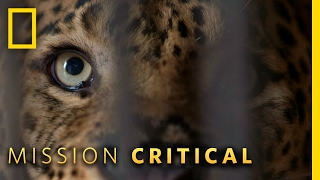 Download A True Man-Eater | Mission Critical Video