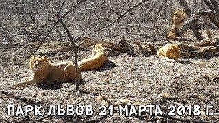 Download ПАРК ЛЬВОВ 21 МАРТА 2018 Г. Video