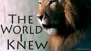 Download African Cats .:The World I Knew:. Video