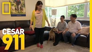 Download Calm and Assertive in Hong Kong | Cesar 911 Video