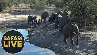 Download safariLIVE - Sunset Safari - June 6, 2018 Video
