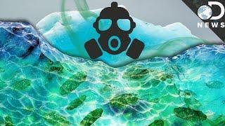 Download How Global Warming Is Awakening Deadly Diseases Video