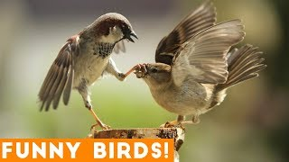 Download Funny Parrot & Bird Videos Weekly Compilation 2018 | Funny Pet Videos Video