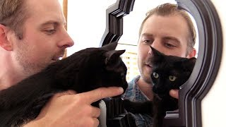 Download 10 Things Most Cat Owners Have Done Video