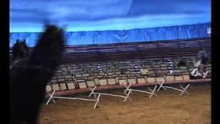 Download Vorschau: Pferdeausbildung im Circus Knie (Nr. 60) Video
