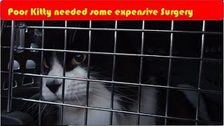 Download Tomcat's Expensive Surgery Video