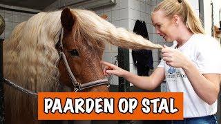 Download WE GAAN JE MISSEN COOKIE 😥 | PaardenpraatTV Video