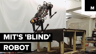 Download This 'Blind' Robot Can Jump On Your Table And Chase You In The Dark Even When Its Leg Is Broken Video
