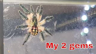 Download Two moults - Super chuffed Video