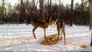 Download Got A Bit Wild At Feeding Time Video
