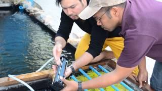 Download airstone shop พามาชม บ่อปลาคาร์พ ขนาดเล็ก Video