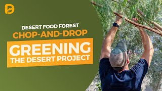 Download Desert Food Forest Chop-and-Drop Video