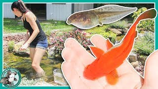Download Fish Pond or Frog Pond? // POND UPDATES Video