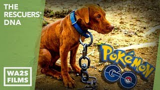 Download Playing Pokemon GO A Dog Was Spotted Chained to Abandoned House - Hope For Dogs | My DoDo Video