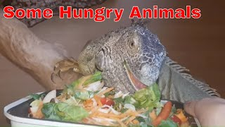 Download Pre Africa Trip Feeding Video Video