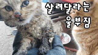 Download 영하-15에서 살려달라는 새끼고양이 극적으로... Video
