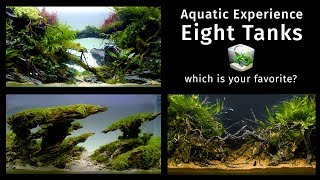 Download Aquatic Experience — Eight Beautiful Large Aquascapes Video