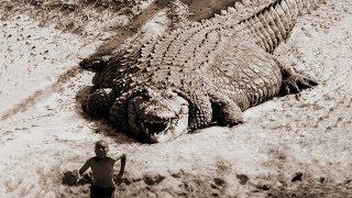 Download TOP 10 LARGEST CROCODILES In The World Video