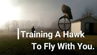 Download Falconry: How To Train A Hawk To Fly With You Video